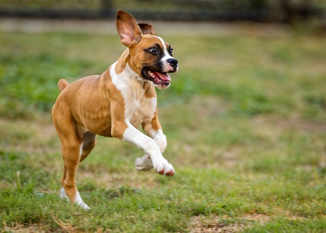 Some dogs have lots of energy that need to be spent through physical activity.