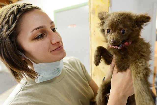 puppy dog visit to veterinarian