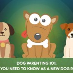 Dog Parenting 101: What You Need To Know as a New Dog Parent [INFOGRAPHIC]