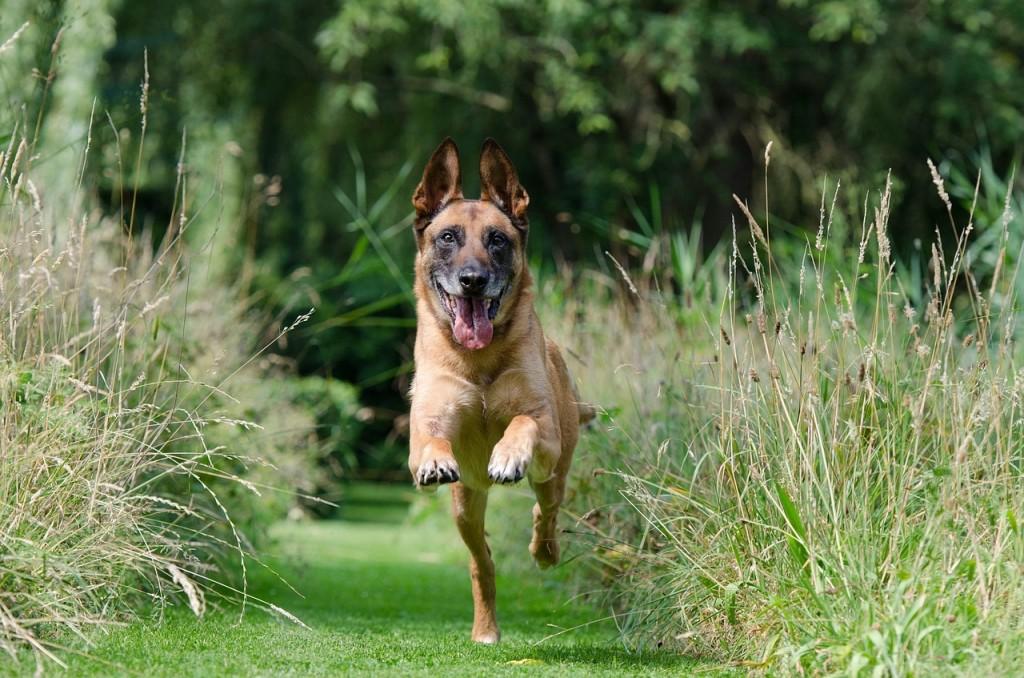 dog run exercise