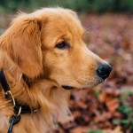 Protect Your Dogs From Fall Allergies With These Tips