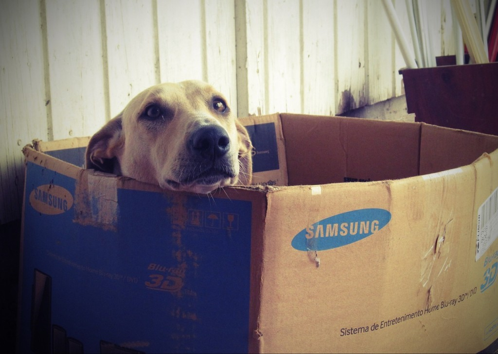 You don't want your dog to live inside a box, do you?