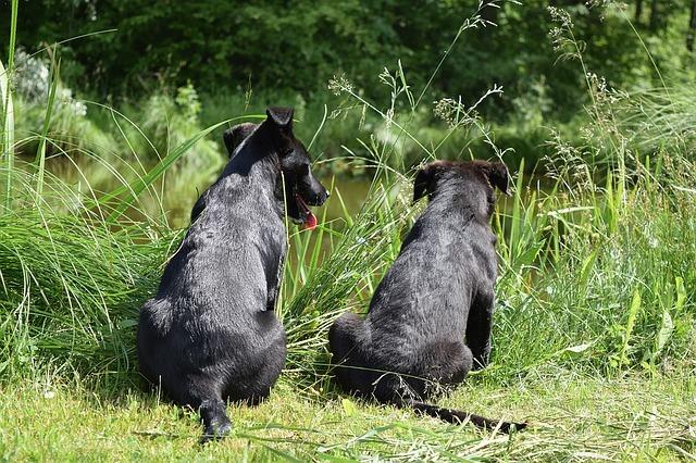 dogs outdoors grass