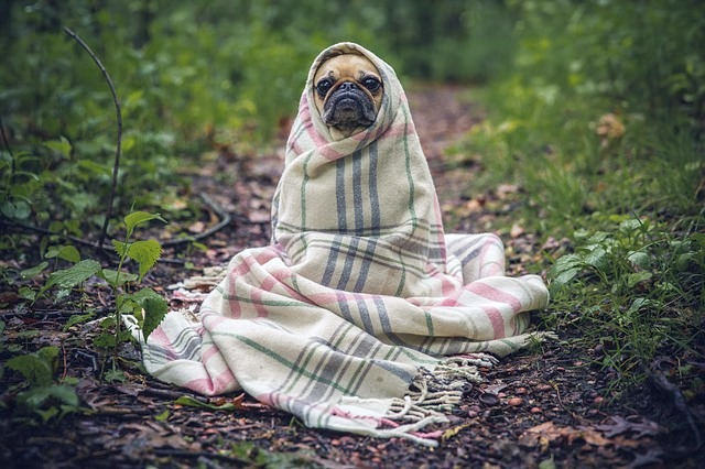pug dog blanket