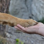 Dry Paws in Dogs: Causes and Treatment
