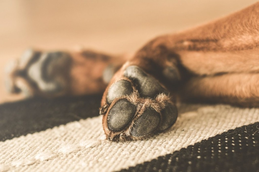 dry paws in dogs