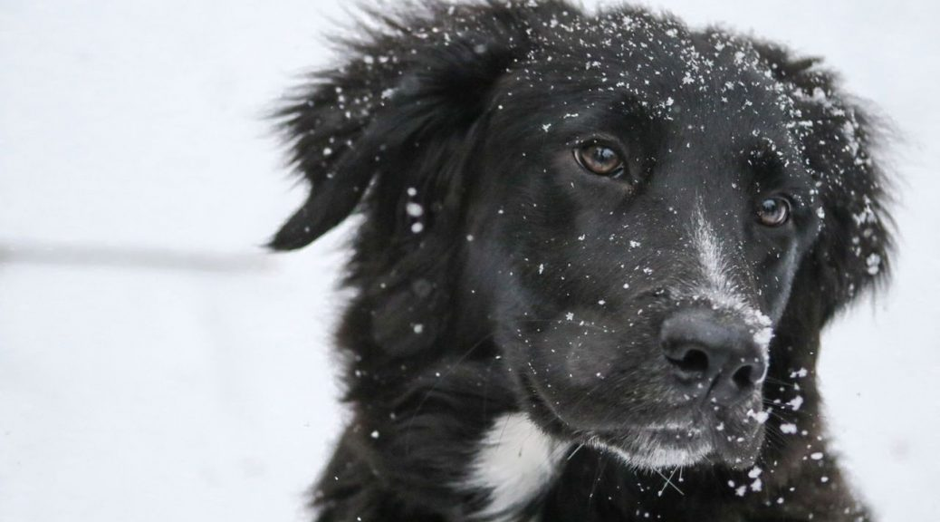 winter dog care tips