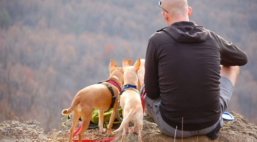 camping with your dog tips