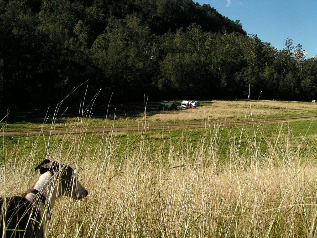 dog camping tips grass