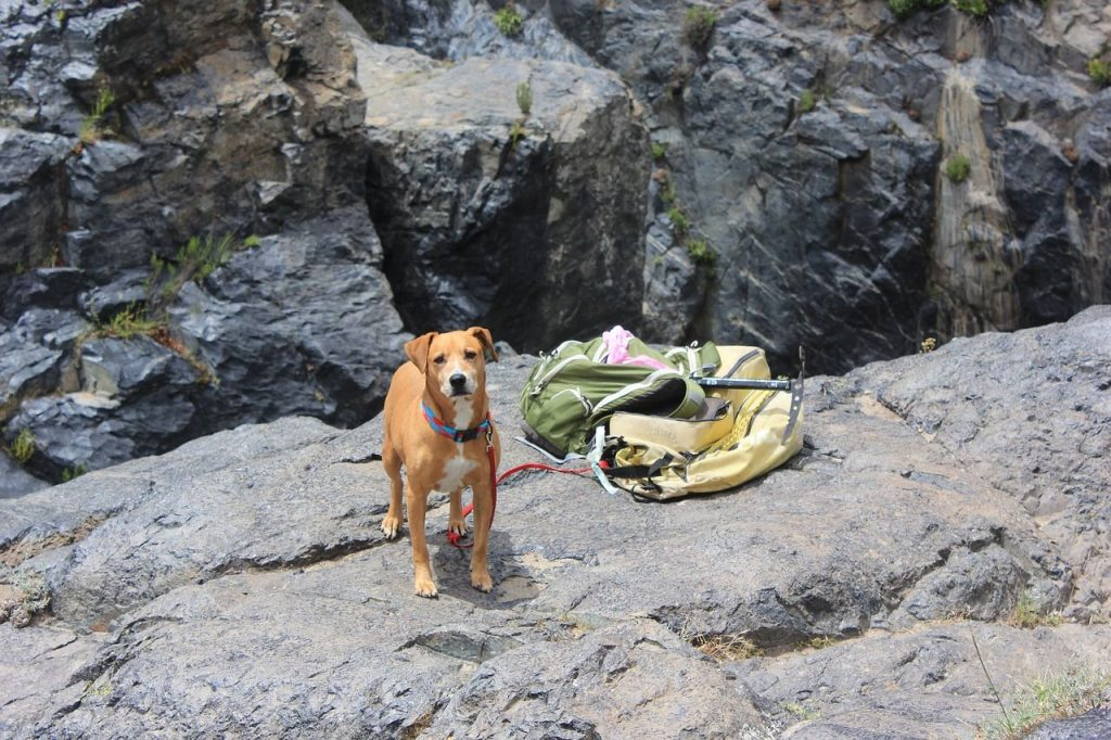safety tips camping with your dog