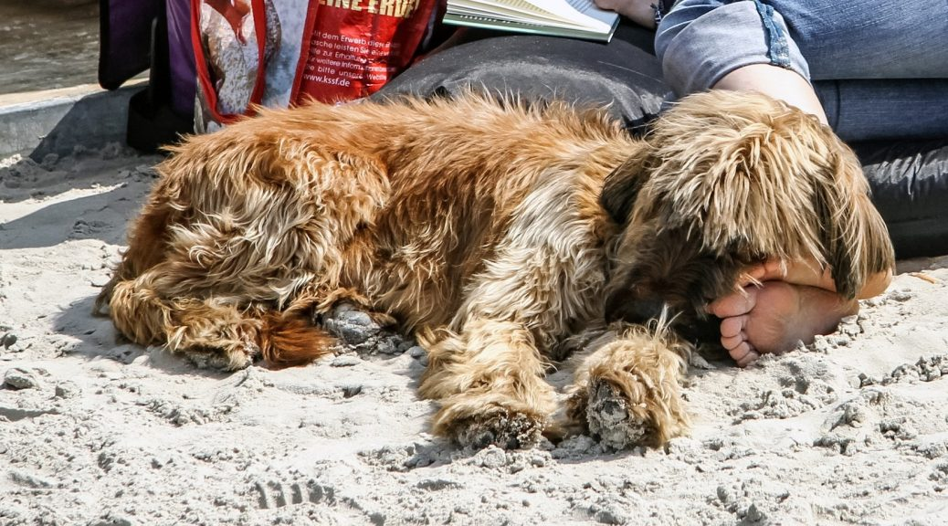bring dog to the beach tips for safety