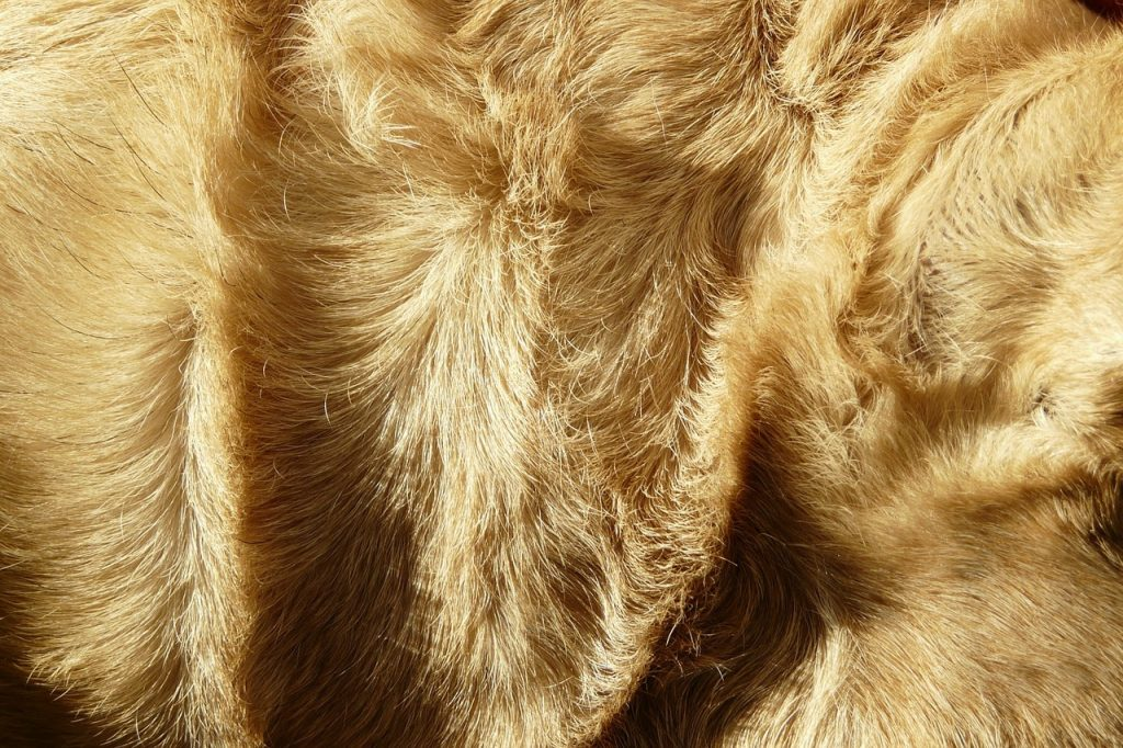 dog fur hair