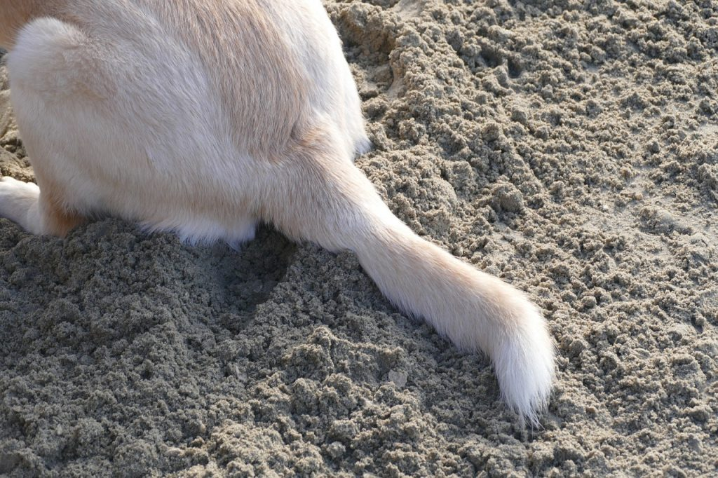 dog tail sitting on the sand
