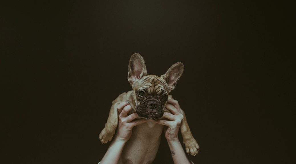 lumps on your dog carry puppy