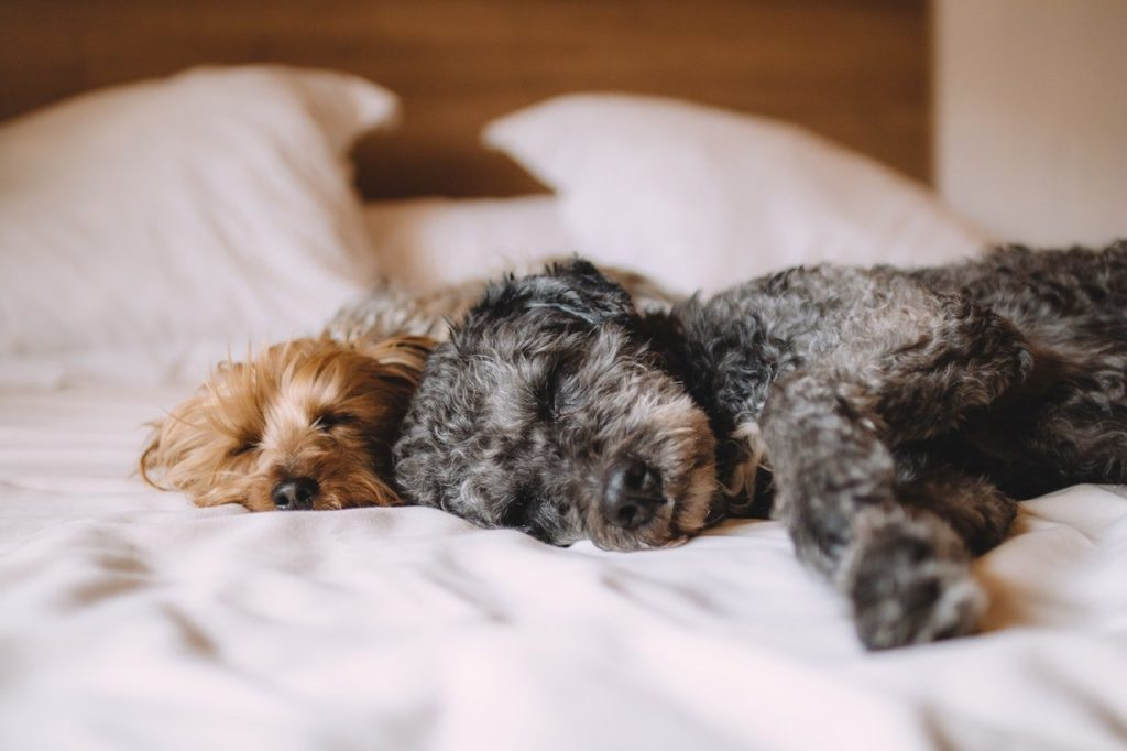 take care of dogs sleeping on bed